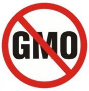 Чем вредны ГМО