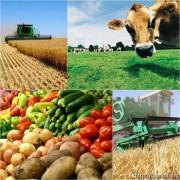 Фонд льготного кредитования Южной Осетии рассмотрит 150 бизнес-проектов